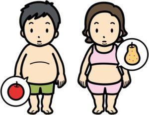 洋ナシ型 リンゴ型
