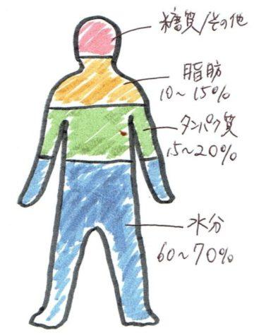 人体の構成