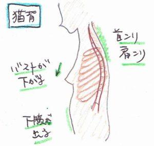 肋骨とバスト