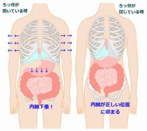 ろっ骨と内臓
